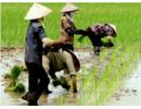 Chuyển đổi mục đích sử dụng từ đất nông nghiệp phải được Thủ tướng đồng ý