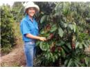 Huỳnh Thị Liên làm chủ trang trại ở tuổi 28