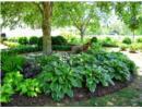 Những cách làm nổi bật khu vườn thiếu sáng