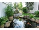 Ngắm khu vườn phong cách Nhật trong biệt thự ở Hà Nội