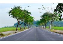 7 yếu tố hình thành nên cơn sốt gom mua đất của người Việt