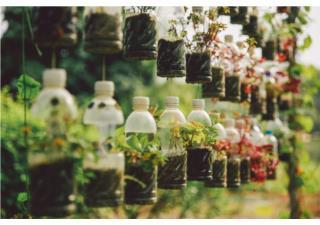 Tiết kiệm chi phí, bảo vệ môi trường nhờ biết tận dụng đồ bỏ đi để làm vườn